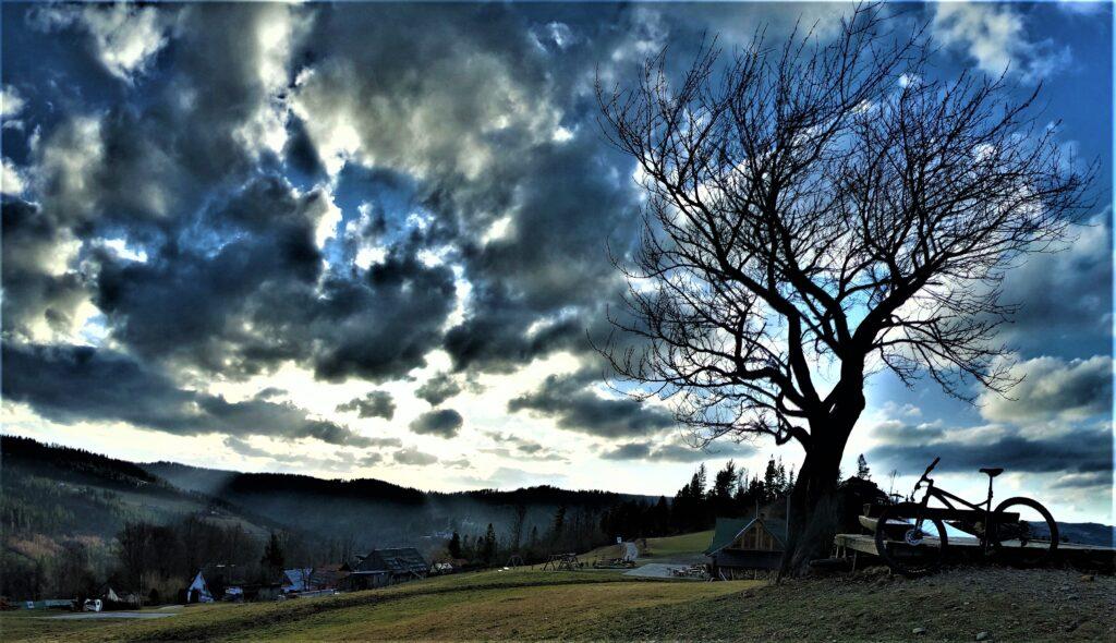 Rowerem na Cieńkowie, Magiczne drzewo na żółtym szlaku